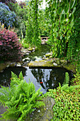 HUNMANBY Grange, Yorkshire: POND with STEPPING STONES AND WEEPING CERCIDIPHYLLUM JAPONICA 'PENDULA', BERBERIS THUNBERGII 'Darts Red Lady', CHRYSOSPLENIUM 'DAVIDII', SELF-Seeded FERN