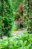 HUNMANBY Grange, Yorkshire: SUNDIAL SEEN THROUGH MIRROR - VIBURNUM DAVIDII IN FOREGROUND