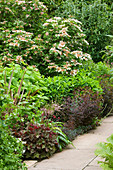 HUNMANBY Grange, Yorkshire: BORDER with HEUCHERA 'CHOCOLATE RUFFLES', EUPHORBIA DULCIS 'CHAMELEON', VIBURNUM SARGENTII 'ONONDAGA', Hydrangea 'Annabelle' AND UNNAMED PHORMIUM