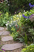 Amelia HEATH Garden, 1, CROSS VILLAS, SHROPSHIRE: GRAVEL AND STONE PATH with ALCHEMILLA MOLLIS, Dianthus (White), ACONITUM AND Yellow Rock ROSES (CISTUS)
