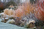 WOODPECKERS, WARWICKSHIRE, Winter: FROSTY BORDER of GRASSES, SEDUM, CORNUS Winter FLAME AND RUBUS THIBETANUS