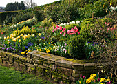 LITTLE LARFORD, WORCESTERSHIRE: Designer DEREK Walker - STONE WALL AND Cottage Garden BORDER IN SPRING PLANTED with Tulipa, NARCISSUS AND Primula