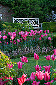 PASHLEY MANOR, EAST Sussex: Box Garden IN SPRING with White SEAT / BENCH SURROUNDED by Tulipa Mariette
