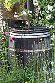 CHELSEA FLOWER Show 2007 - THE Fetzer SUSTAINABLE Winery GARDEN. Traditional HALF BARREL Water Butt FOR COLLECTING RAINWATER. RECYCLING, RECYCLED