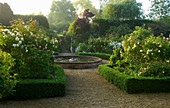 MARINERS Garden, BERKSHIRE. Designer FENJA ANDERSON - THE ROSE Garden at DAWN - ROSE 'PROSPERITY', ROSE COMPTE De Chambord, Rosa SANCTA AND Box EDGING with FOUNTAIN IN THE CENTRE