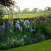 THE Old RECTORY, HASELBECH, NORTHAMPTONSHIRE - LAWN, SHEEP IN FIELD AND HERBACEOUS BORDER PLANTED with Iris 'JANE PHILLIPS', Digitalis 'SUTTONS Apricot' & PAPAVER 'Patty'S PLUM'