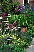 Amelia HEATH Garden, 1, CROSS VILLAS, SHROPS: PLANTING Beside A PATH Beside HOUSE with LANTERN, GLADIOLUS COMMUNIS BYZANTINUS, ACONITUM, CLEMATIS 'ETOILE VIOLETTE' & WARSAW Nike'