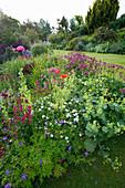 MARINERS Garden, Berkshire, Designer FENJA ANDERSON - Wine AND Red BORDER - GERANIUM SPINNERS, PENSTEMON GARNET, ASTRANTIA Claret, PAPAVER SOMNIFERUM, ALCHEMILLA MOLLIS