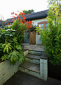DARREN CLEMENTS Garden, STAFFORDSHIRE. STEPS with BAMBOO, FATSIA JAPONICA AND CROCOSMIA 'LUCIFER'