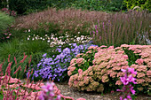 Lady Farm, Somerset: Designer, JUDY PEARCE - New PERENNIAL BORDER with SEDUM AUTUMN JOY, Aster FRIKARTII Mönch, Anemone TOMENTOSA ROBUSTISSIMA, LYTHRUM FIRE CANDLE