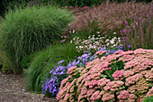 Lady Farm, Somerset: Designer, JUDY PEARCE - New PERENNIAL BORDER with SEDUM AUTUMN JOY, Aster FRIKARTII Mönch, Anemone TOMENTOSA ROBUSTISSIMA