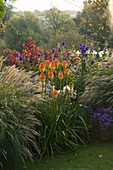 PETTIFERS Garden, OXFORDSHIRE: AUTUMN BORDER with MISCANTHUS AND KNIPHOFIA