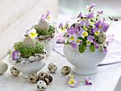 Viola cornuta (Hornveilchen), Lepidium (Kresse)