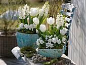 Tulipa 'Mondial' (Tulpen), Hyacinthus 'White Pearl' (Hyazinthen), Viola corn