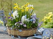Frühlingskorb mit Narcissus 'Tete a Tete' (Narzissen), Hyacinthus 'Carnegie'