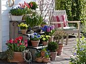 Pflanzentreppe mit Frühlingsblühern