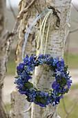 Blauer Frühlingskranz aus Muscari (Traubenhyazinthen), Viola cornuta