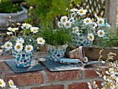Mosaiktöpfe mit Leucanthemum hosmariense (Frühlingsmageriten)