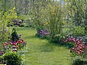 Rasenweg zwischen Frühlingsbeeten mit Tulpen