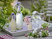 Flaschen mit Sirup von Waldmeister (Galium odoratum)