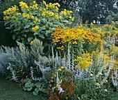 Yellow Garden:SOLIDAGO 'GOLDENMOS',Artemisia 'LUDOVICIANA', HELENIUM 'Gold Rausch'. TUINEN Ton TER LINDEN, Holland
