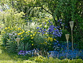 Blau-gelbes Beet mit Trollius europaeus (Trollblumen), Campanula persicifolia