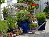 Terrasse mit Kräutern und Sommerblumen