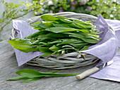 Frisch geerntete Blätter von Spitzwegerich (Plantago lanceolata)