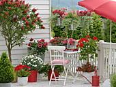 Rot-weißer Balkon mit Callistemon (Zylinderputzer), Argyranthemum