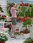 Rot-weißer Balkon mit Argyranthemum (Margerite), Dahlia (Dahlie),