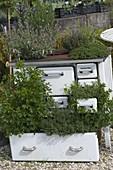 Ungewöhnliches Kräuterbeet in alten Küchenherd gepflanzt