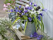 Strauß aus Campanula persicifolia und C. glomerata (Glockenblumen)