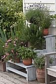 Pflanzentreppe mit Kräutern