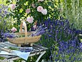 Korb mit frisch geschnittenem Lavendel 'Hidcote Blue' (Lavandula)