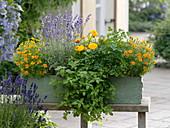 Kräuter und eßbare Blüten im grünen Holzkasten
