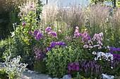 Calamagrostis acutiflora 'Overdam' (Reitgras), Phlox paniculata 'Lilac Flame'