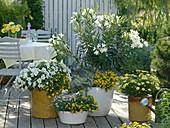 Weiß - gelbe Terrasse mit Oleander