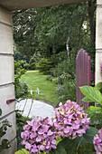 Blick durch das geöffnete Gartentor in den Garten, Hydrangea (Hortensien)