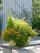 Tagetes tenuifolia (Studentenblume), Calibrachoa 'Capri Gold'