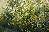 Gelbes Beet mit Hemerocallis 'Green Flutter' (Taglilie), Anthemis tinctoria