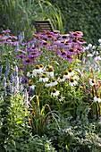 Echinacea purpurea 'Magnus', 'White Swan' (Sonnenhut), Imperata