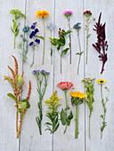Schnittblumen - Tableau für Bauerngartenstrauß
