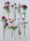 Schnittblumen - Tableau