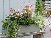 Kräuterkasten mit Rose und Gras