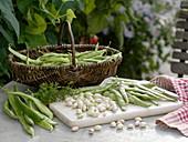 Ausgepahlte Bohnenkerne von Körnerbohne 'Rote Kiebitzbohne'