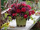 Roter Frühherbststrauß : Rosa 'Red Leonardo Da Vinci'