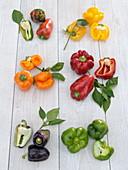 Tableau mit Paprika (Capsicum) in verschiedenen Farben