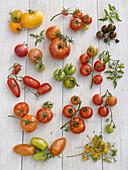 Tomaten-Tableau