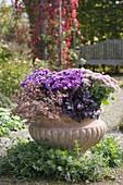 Herbstlich bepflanzte Terracotta - Schale auf Weg