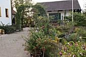 Künstlergarten : gepflasterte Hofeinfahrt führt durch Torbogen aus Carpinus
